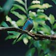 チルチル、ミチル!青い鳥だよ