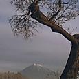 老木と富士