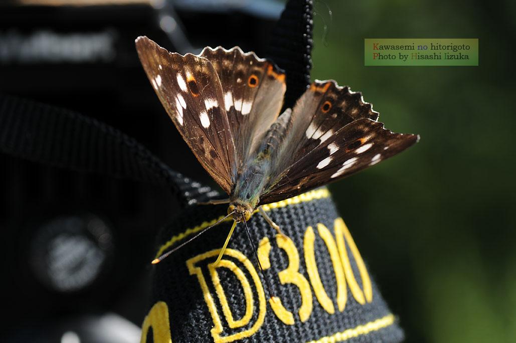 Dsc_3094